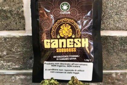Ganesh seedless by Cannabe