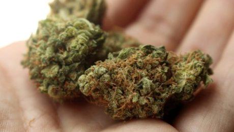 Seccare e conciare correttamente la cannabis