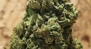Vendita cannabis legaleonline